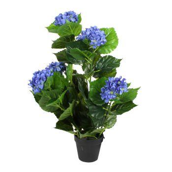 Blue Hydrangea Flower in Plastic Pot
